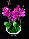 A Wide Variety of Orchid Arrangements