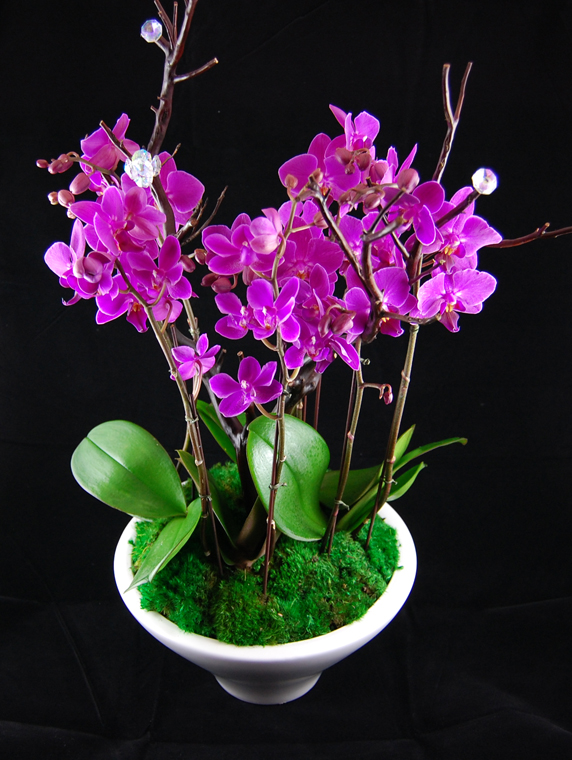 A Wide Variety of Orchid Arrangements | LUCKY Bamboo
